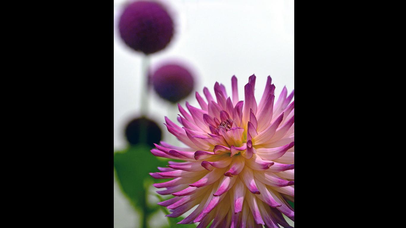 Twinkle Flower